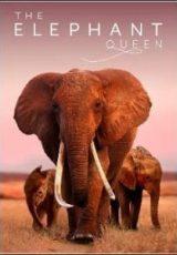 The Elephant Queen Legendado